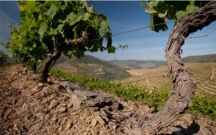 Graham's Douro Old Vines Winery Image