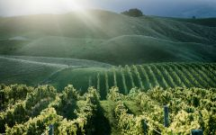 Awatere River Wine Company Awatere River Vineyard Winery Image