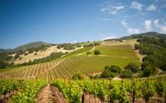Kunde Estate Winery Kunde's Stunning Landscape Winery Image