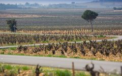 Famille Perrin Vineyards in Chateauneuf-du-Pape Winery Image