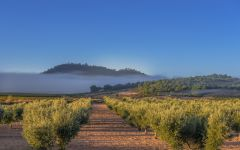 Casa Castillo Morning Fog Clears in the Vineyard Winery Image