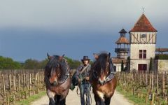 Chateau Smith Haut Lafitte Organic Viticulture Winery Image