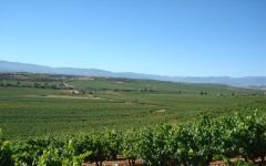 Marques de Caceres Vineyards in Rioja Winery Image