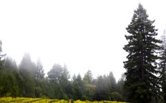 La Crema Vineyards in the Russian River Valley Winery Image
