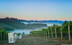 Shea Wine Cellars Fog rolling through the vineyard Winery Image