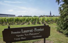Laurent Perrier Chardonnay Vineyards Winery Image