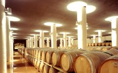 Mazzei  Barrels at Mazzei Family Winery Winery Image