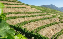 Altano Vineyards in the Douro Winery Image