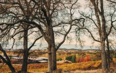 Terra d'Oro Prime Amador County Location Winery Image