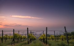 Ultimate Provence Winery Image