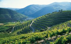 Dow's Quinta Bomfim Terraces Winery Image