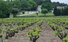 Chateau D'Aqueria 400 Year Old Vineyards and Chateau Winery Image
