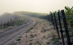 Chanin Foggy Vineyards of Chanin Winery Winery Image