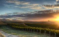 Nautilus Estate Clay Hills Vineyard, Marlborough Winery Image