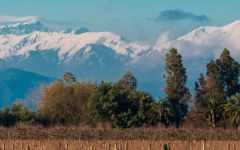 Aresti The Spectacular Andes Behind the Vines Winery Image