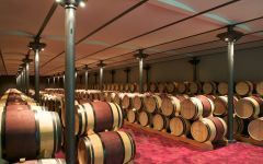 Ornellaia Barrel Room Winery Image