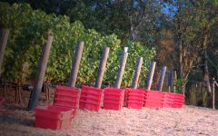 Vineyard 29 Harvest at Vineyard 29 Winery Image
