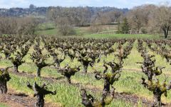 Carlisle Papera Ranch Vineyard in Winter Winery Image