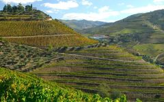 Quinta do Crasto Vineyards Along the Douro River Winery Image