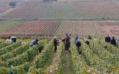 Bouchard Aine & Fils Vineyard work Winery Image