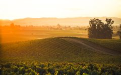La Crema Vineyards in Carneros Winery Image