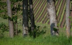 Argyle Spirit Hill Vineyard Winery Image