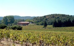 Chateau de Segries  Winery Image