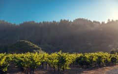 Korbel  Winery Image