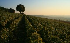 Bouchard Pere & Fils  Corton Charlemagne Winery Image