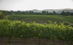 MacRostie Thale's Vineyard Winery Image