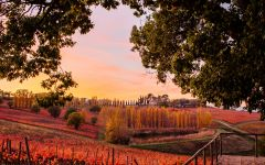 Arnaldo Caprai Arnaldo Caprai vineyards in Autumn Winery Image