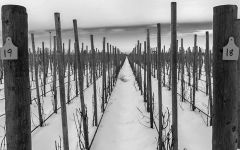 Horsepower Vineyards Winter at our Vineyard Winery Image