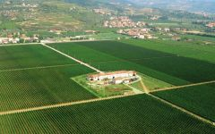 Tommasi Aerial View of Tommasi Winery Image
