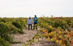 Bodegas Ordonez – Toro   Winery Image
