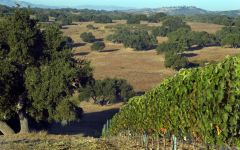 Jonata Jonata Ranch Winery Image