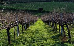 Alexakis Vineyard in the Heraklion Prefecture Winery Image