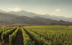 Trapiche Vineyards in the Valle de Uco Winery Image