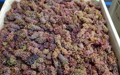 Carlisle Compagni Portis just Picked Winery Image