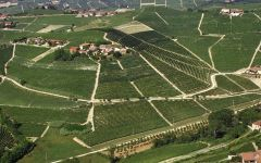 Produttori del Barbaresco Asili Vineyard Winery Image