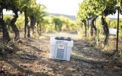 AIX Grenache, Syrah and Cinsault grapes Winery Image