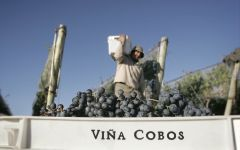Vina Cobos Harvest Winery Image