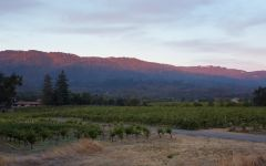 Ravenswood Sonoma Valley Winery Image