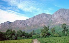 Porcupine Ridge Vineyards in South Africa Winery Image