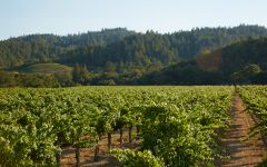 Robert Mondavi To Kalon Vineyard Winery Image
