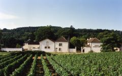 Domaine Antonin Guyon Vineyard Winery Image