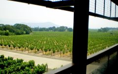 Dominus Estate Napanook Vineyard Winery Image