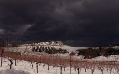 Alexakis Winter in Heraklion Prefecture Winery Image