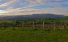 Banner image for winery header