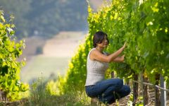 Matanzas Creek Winery Winemaker Marcia Torres Forno Winery Image