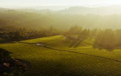 Balletto Winery The Russian River Valley Winery Image